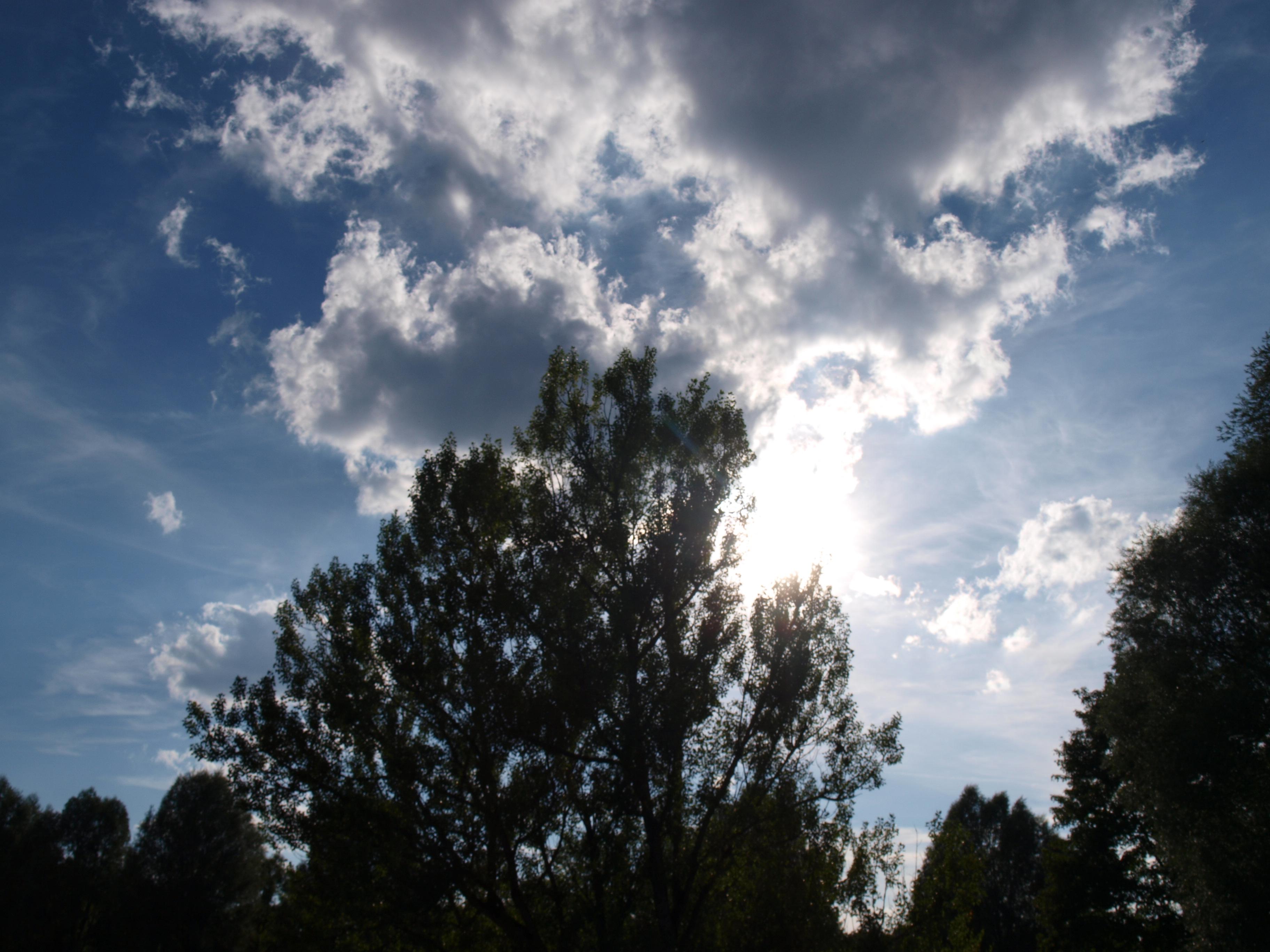 Baum direkt am Wasserkraftwerk Flaucher