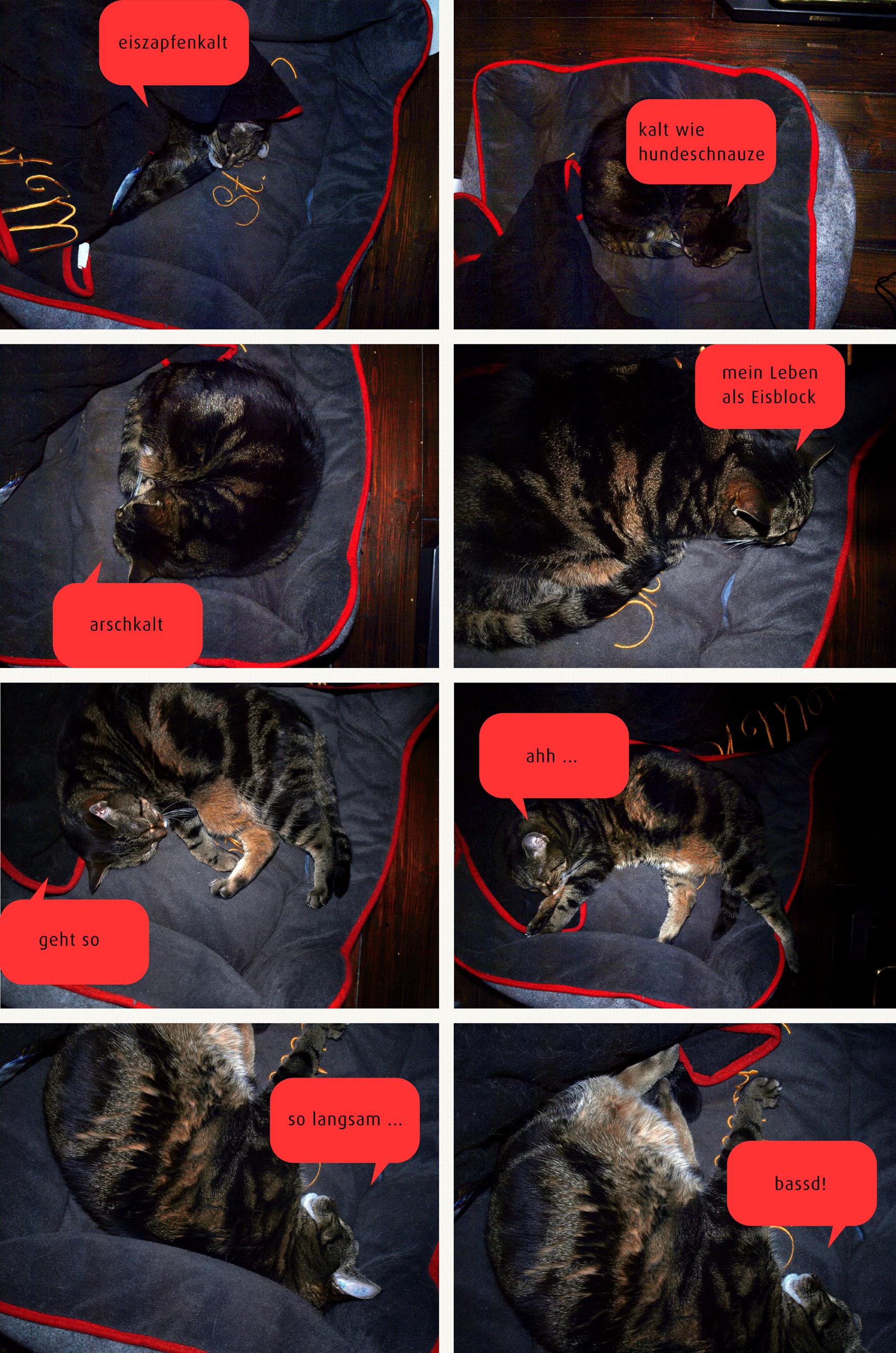 An Katzen die Wohnungstemperatur sehen