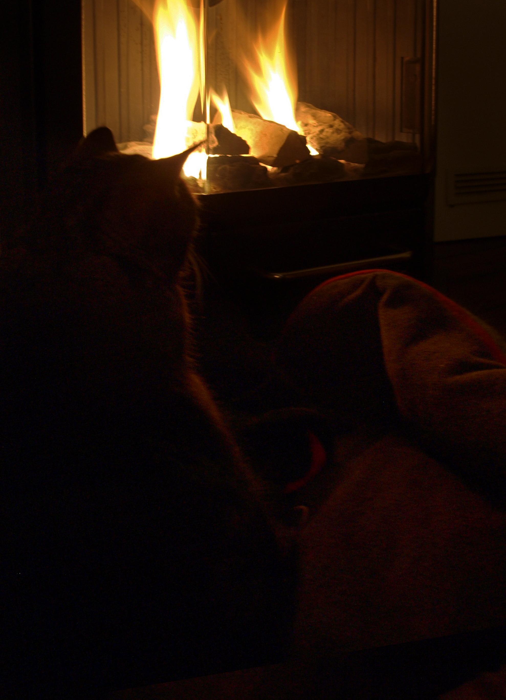 Katzen lieben Wärme