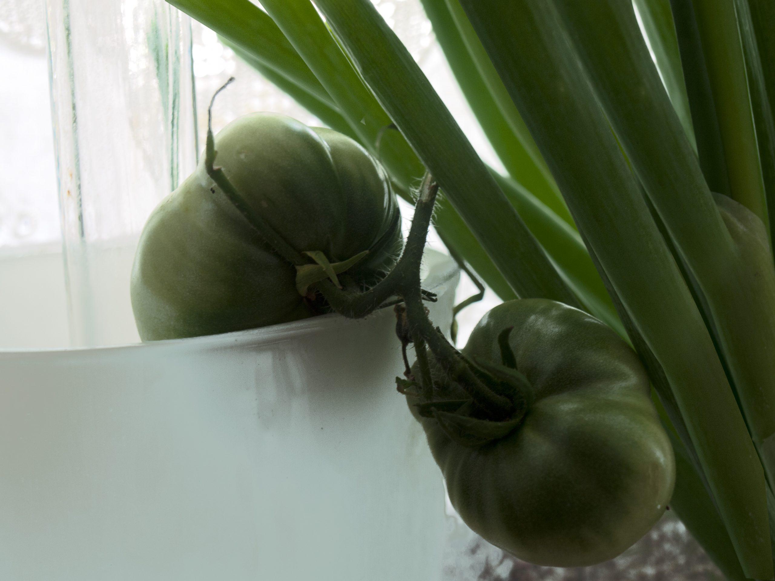 Sinfonie in Grün - Grüne Tomaten neben Frühlingszwiebeln
