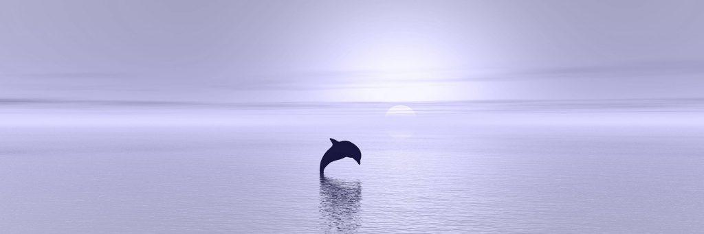 Delphin springt aus dem Wasser