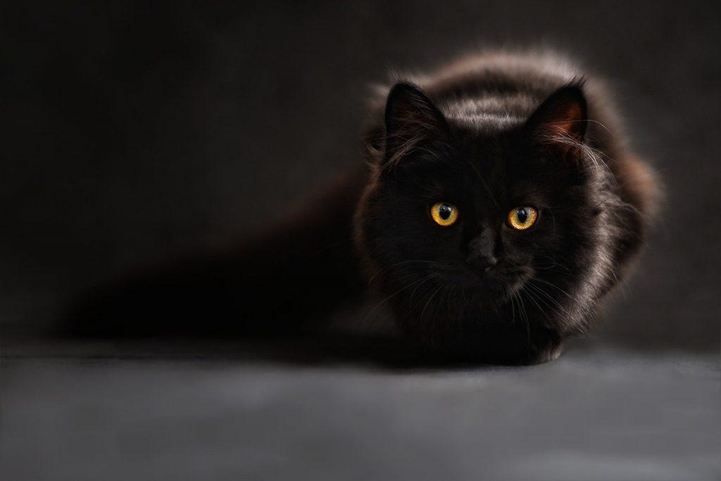 Schwarze Katze auf dunklem Hintergrund