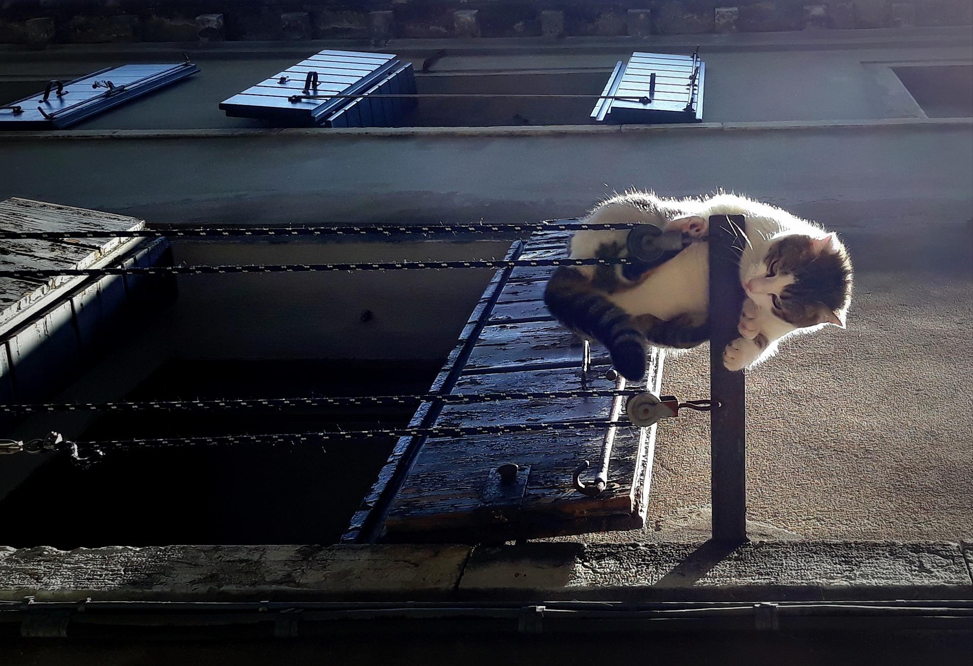 Mutige Katze